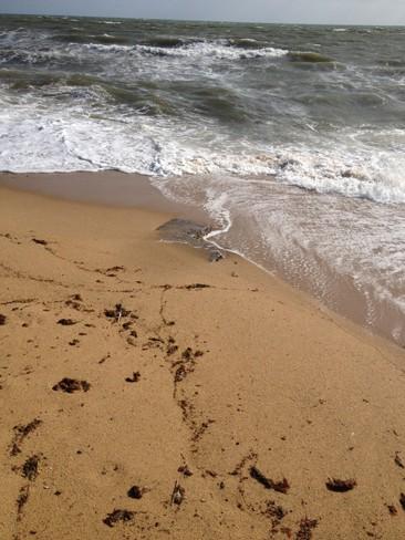 Drain Repair Black Rock Beach